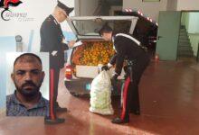 Lentini | Ruba arance e colpisce con un cric il proprietario del fondo agricolo, arrestato catanese 44enne
