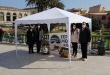 Siracusa | Fdi celebra le donne con un rametto di mimosa