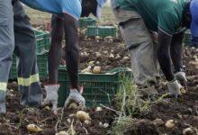 Cassibile | La comunità chiede più controlli sui proprietari dei campi