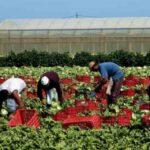 Cassibile | La Cgil si fa carico dei lavoratori immigrati
