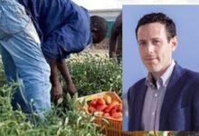 Siracusa | L'Assessore Buccheri sul caso Cassibile: affrontare il nodo caporalato
