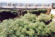 Siracusa | Lavori di manutenzione area Fonte Aretusa: oltre 73mila euro stanziati dal Comune