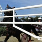 Siracusa | Giovedì di trotto con i tre anni in apertura: ospitata una II Tris