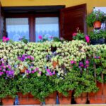 Belvedere | Balconi ed esercizi commerciali in fiore: conclusasi la prima edizione