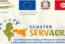 Sicilia | Settore olivicolo. La ricetta del Cluster Servagri