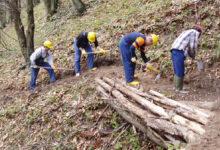 Palermo | Approvato il disegno di legge di riforma del comparto forestale