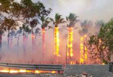 Catania | Incendi, Musumeci chiede lo stato di mobilitazione della Protezione civile