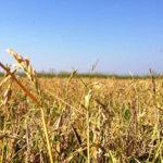 Lentini | Alla scoperta delle risaie di contrada Cuccumella, iniziativa di Slow Food