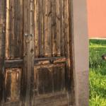 Augusta | No al randagismo con le sterilizzazioni e la riqualificazione dell'ambulatorio veterinario
