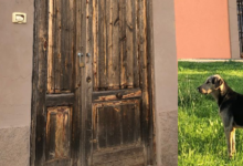 Augusta   No al randagismo con le sterilizzazioni e la riqualificazione dell'ambulatorio veterinario
