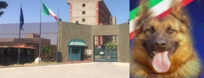 Augusta   Fiutata dai cani Tony e Kira la droga che familiari di detenuti tentavano di introdurre in carcere