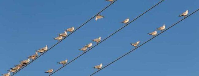 Noto   Sparava agli uccelli: giovane 19enne denunciato dalla polizia